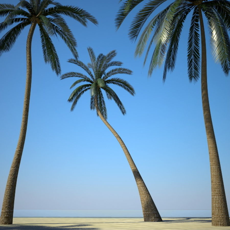 Palm Trees royalty-free 3d model - Preview no. 4