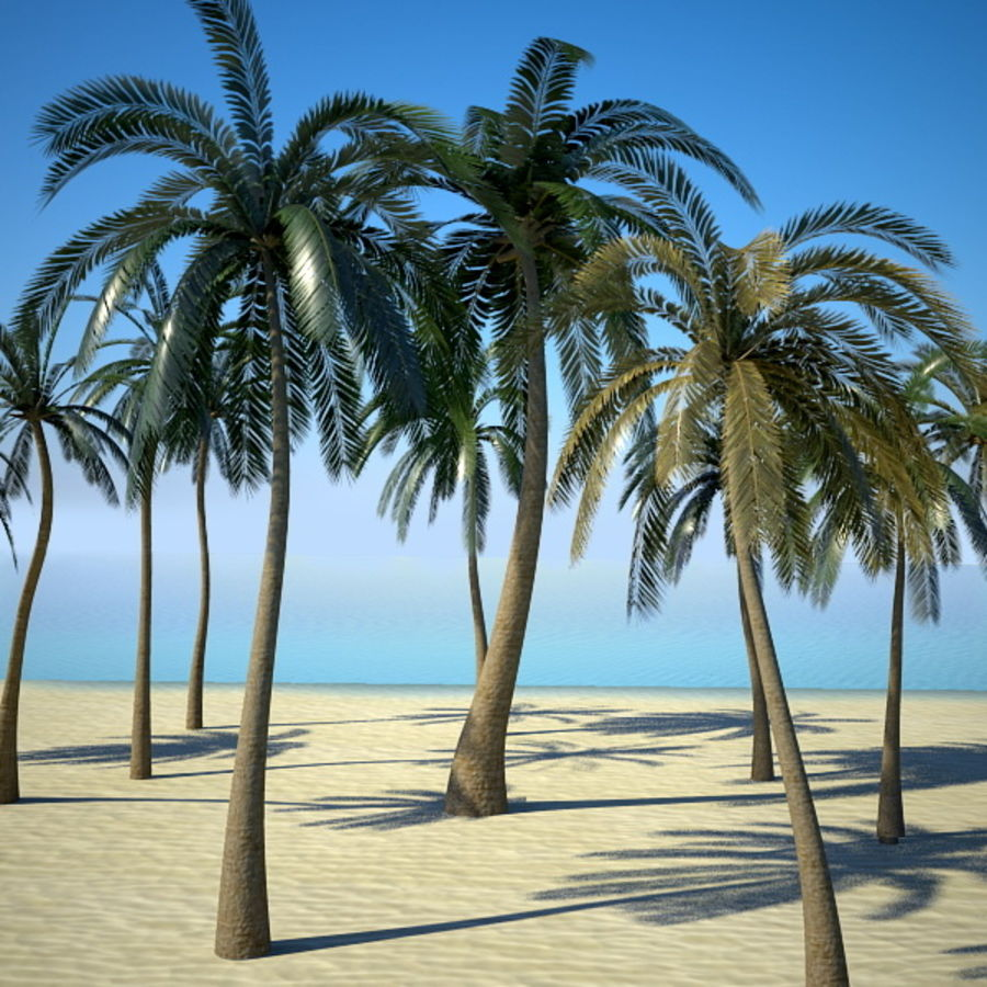 Palm Trees royalty-free 3d model - Preview no. 3
