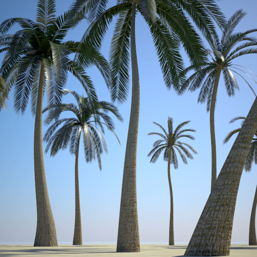 Palm Trees royalty-free 3d model - Preview no. 2