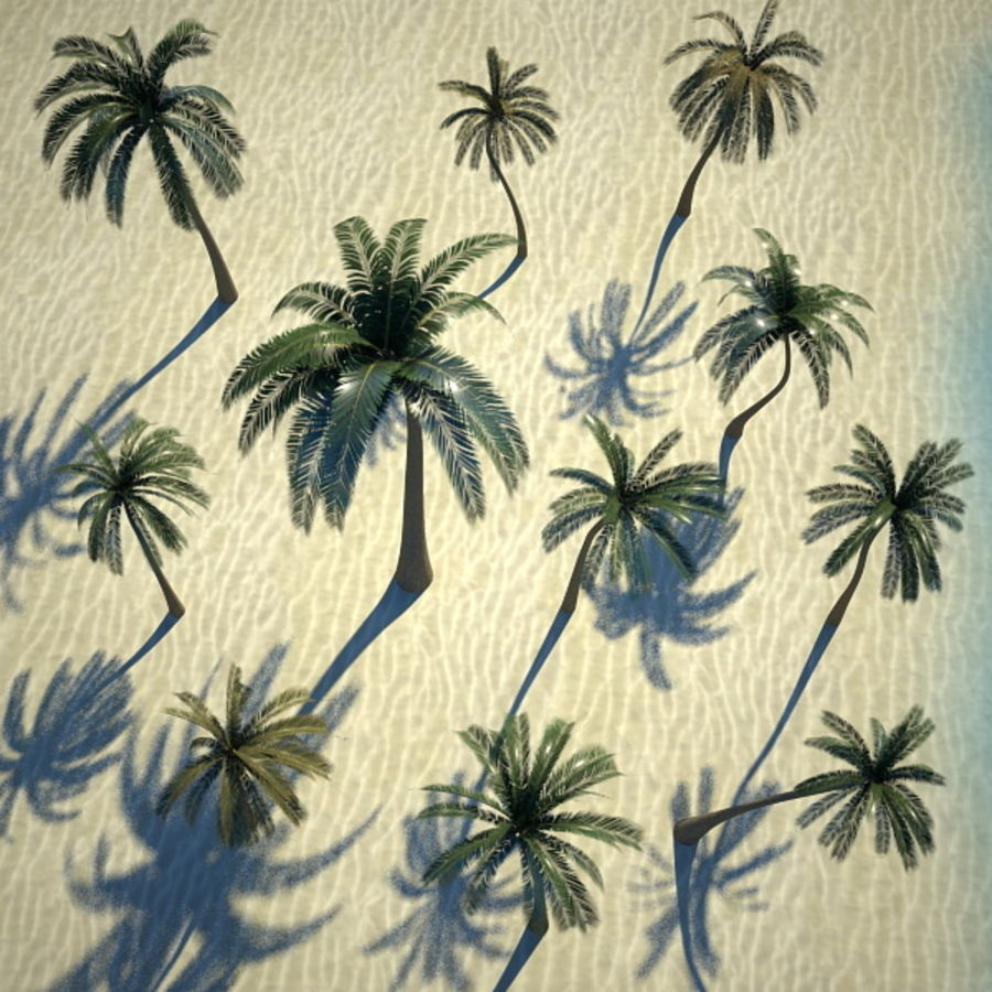Palm Trees royalty-free 3d model - Preview no. 6