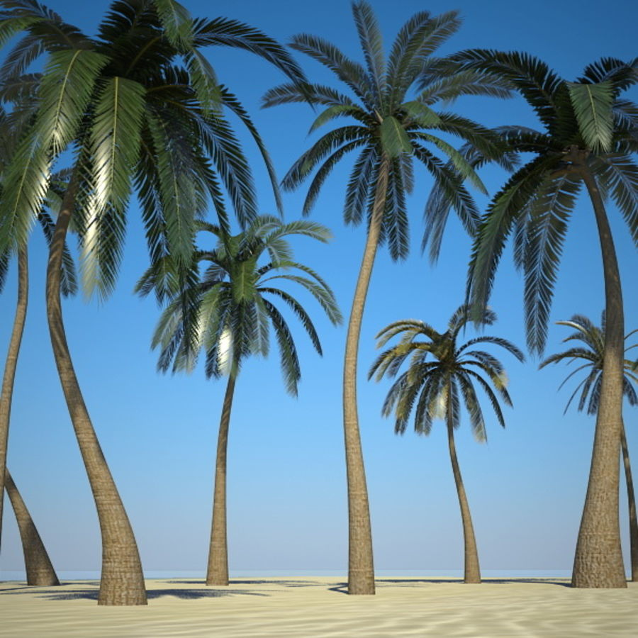 Palm Trees royalty-free 3d model - Preview no. 5