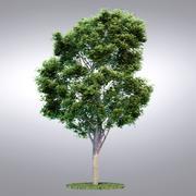 HI Realistic Series Tree - 001 3d model
