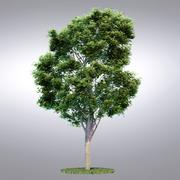 HI Realistic Series Tree - 001 3d model