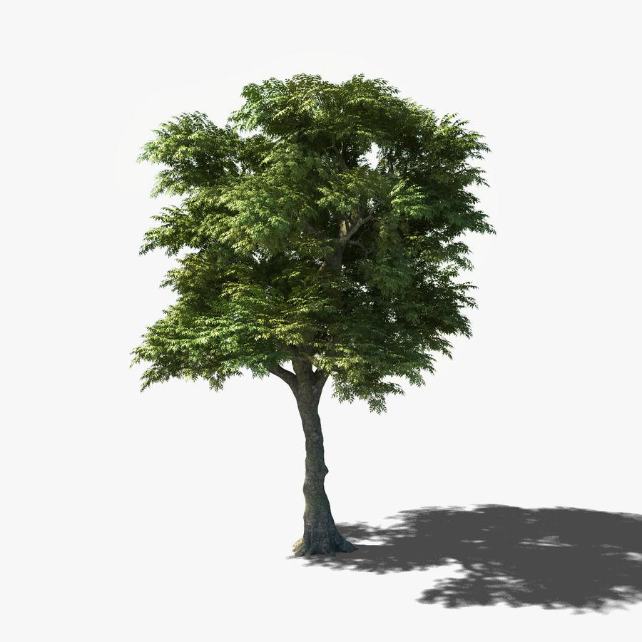 Frêne royalty-free 3d model - Preview no. 13