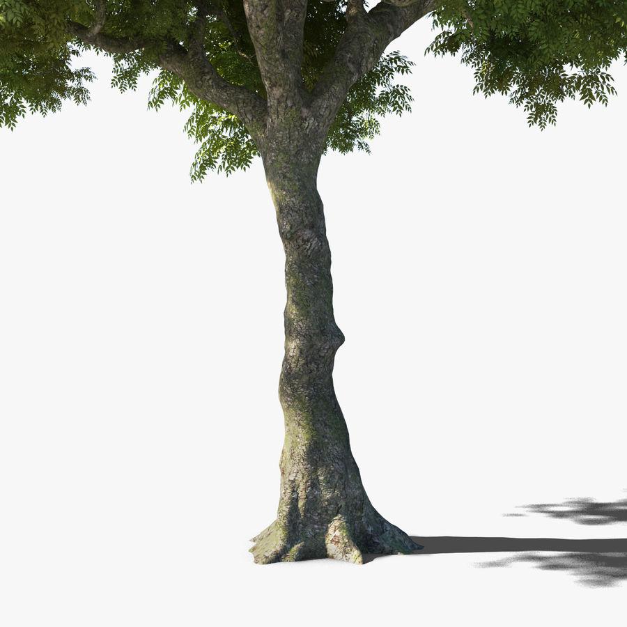 Frêne royalty-free 3d model - Preview no. 21