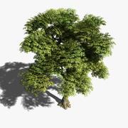 Árvore de cinzas 3d model