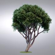 HI Realistic Series Tree - 115 3d model