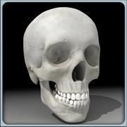 頭蓋骨/男性 3d model