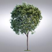 HI Realistic Series Tree - 019 3d model