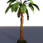 Palma da árvore de banana 3d model