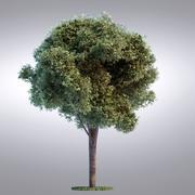 HI série árvore realista - 098 3d model