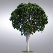 HI Realistic Series Tree - 008 3d model