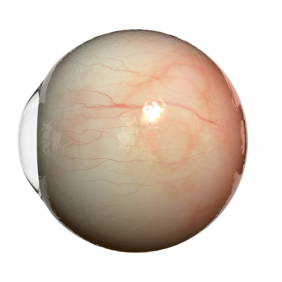 Eyeball royalty-free 3d model - Preview no. 7