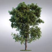 Serie de árboles realistas HI - 093 modelo 3d