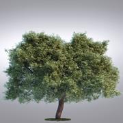안녕 현실적인 시리즈 나무 - 101 3d model