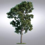 Árvore da Série Realista HI - 102 3d model