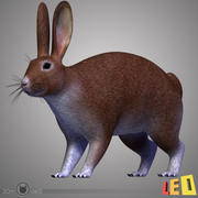 Rabbit Tex. 3d model