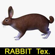 兔子Tex。 3d model