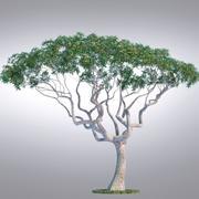 HI现实系列树 -  010 3d model