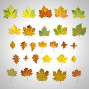 Folhas de outono 3d model