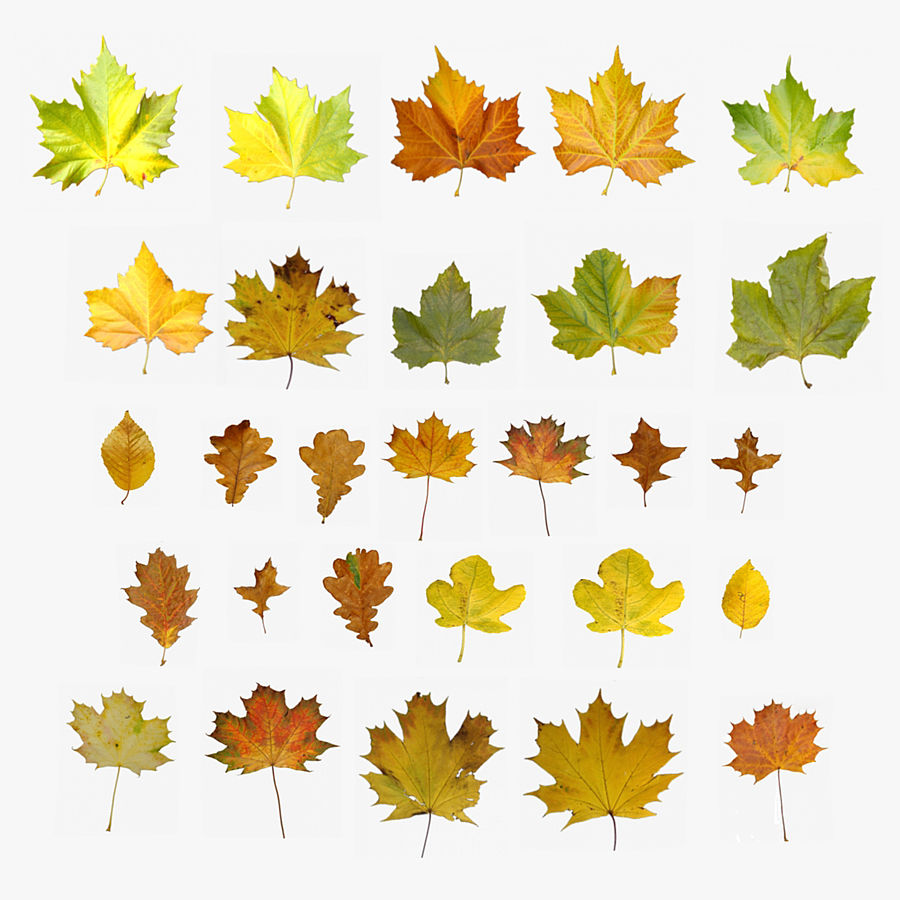 Autumn Leaves 3D Model $35 -  ma  obj  max  fbx - Free3D