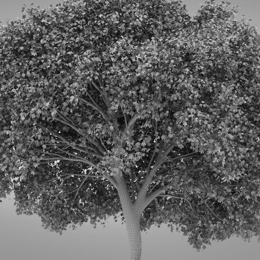 HI Realistic Series Tree - 100 royalty-free 3d model - Preview no. 6