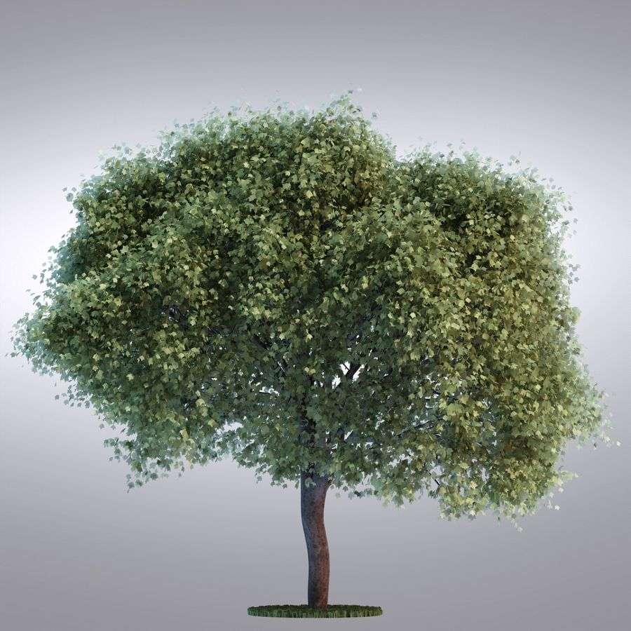 HI Realistic Series Tree - 100 royalty-free 3d model - Preview no. 1