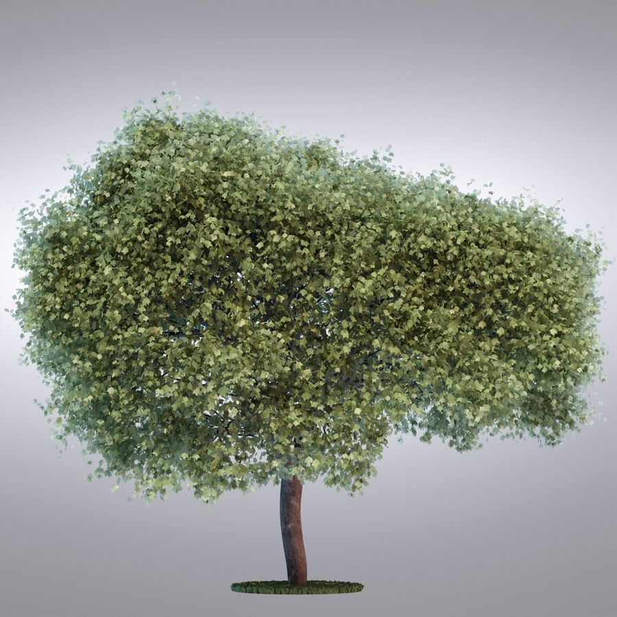 HI Realistic Series Tree - 100 royalty-free 3d model - Preview no. 2