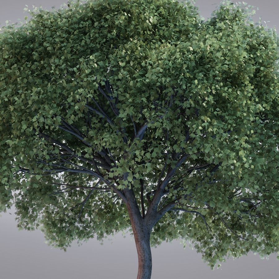 HI Realistic Series Tree - 100 royalty-free 3d model - Preview no. 5