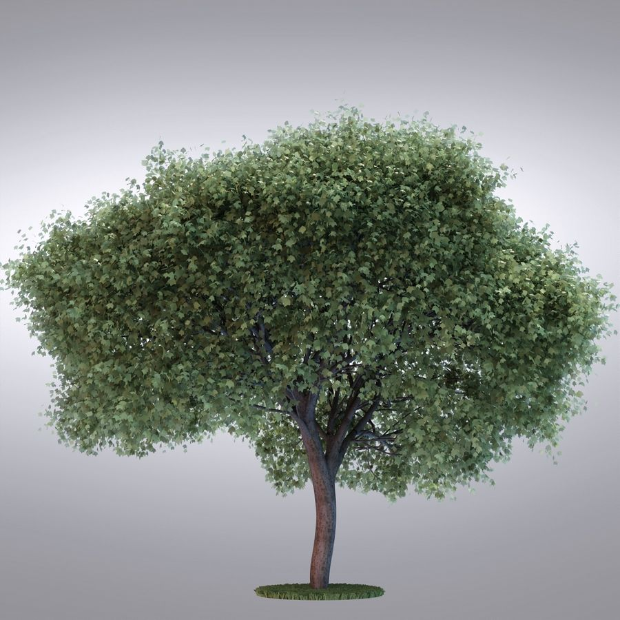 HI Realistic Series Tree - 100 royalty-free 3d model - Preview no. 3