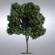 Serie de árboles realistas HI - 094 modelo 3d