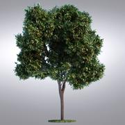 HI Realistic Series Tree - 094 3d model