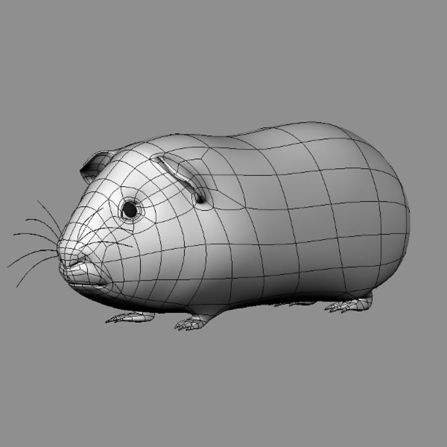 Guinea Pig royalty-free 3d model - Preview no. 3