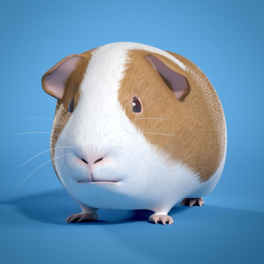 Guinea Pig royalty-free 3d model - Preview no. 2