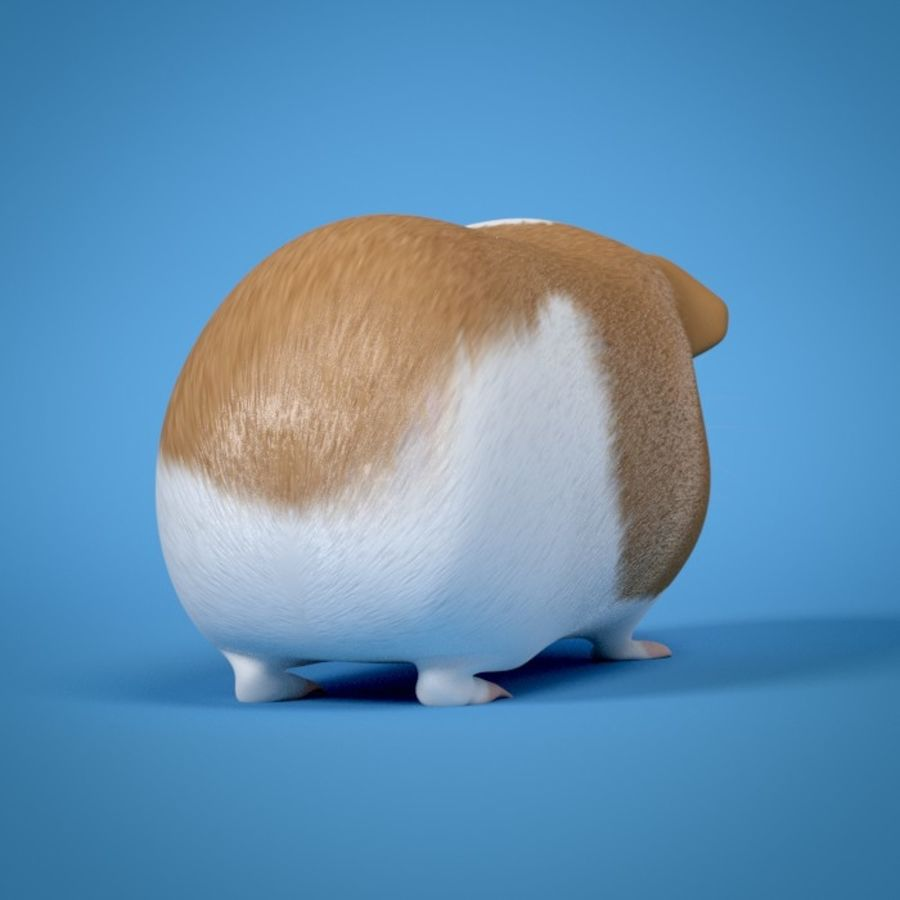 Guinea Pig royalty-free 3d model - Preview no. 4