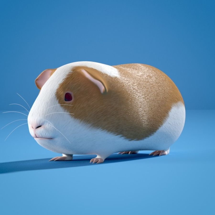 Guinea Pig royalty-free 3d model - Preview no. 1