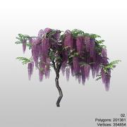wisteria 02 3d model