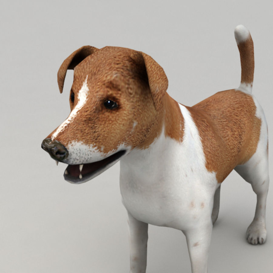Jack Russell Terrier royalty-free 3d model - Preview no. 7