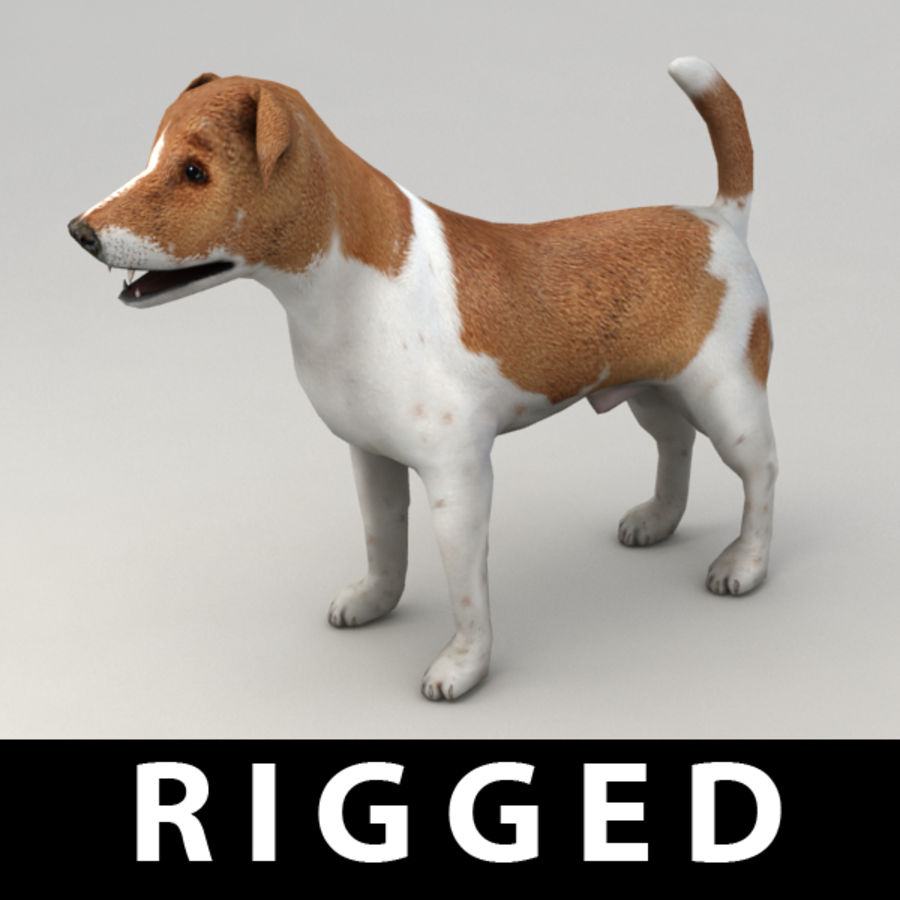 Jack Russell Terrier royalty-free 3d model - Preview no. 1