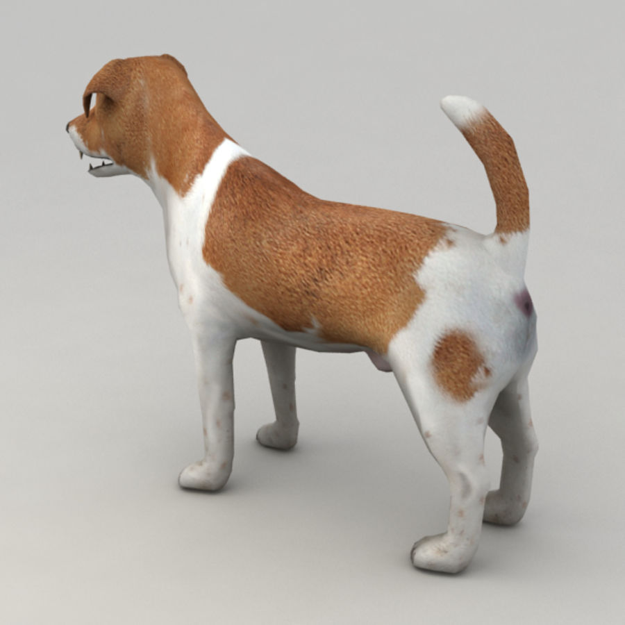 Jack Russell Terrier royalty-free 3d model - Preview no. 3