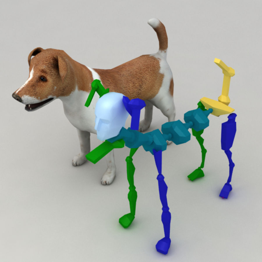 Jack Russell Terrier royalty-free 3d model - Preview no. 8