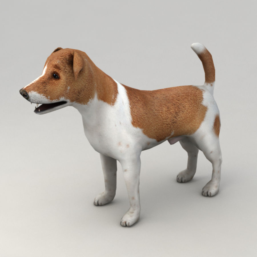 Jack Russell Terrier royalty-free 3d model - Preview no. 2