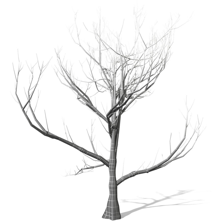 Arbre sans feuilles royalty-free 3d model - Preview no. 4