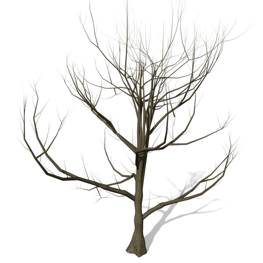 Arbre sans feuilles royalty-free 3d model - Preview no. 1