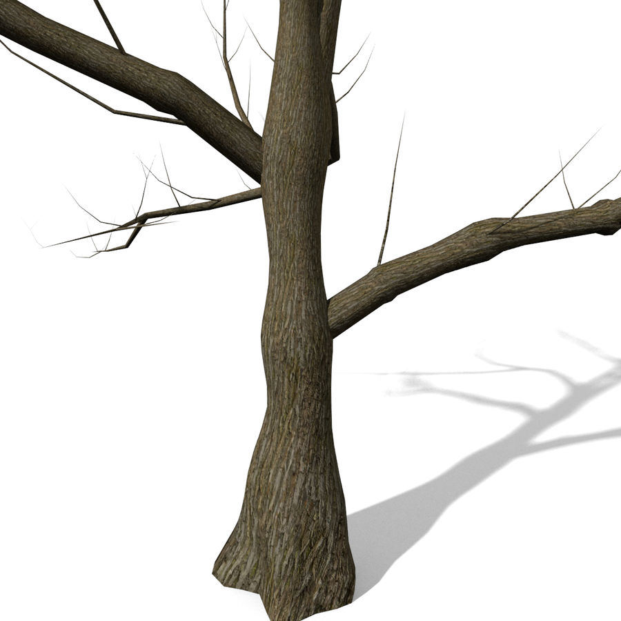 Arbre sans feuilles royalty-free 3d model - Preview no. 3