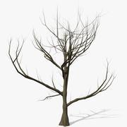 葉のない木 3d model