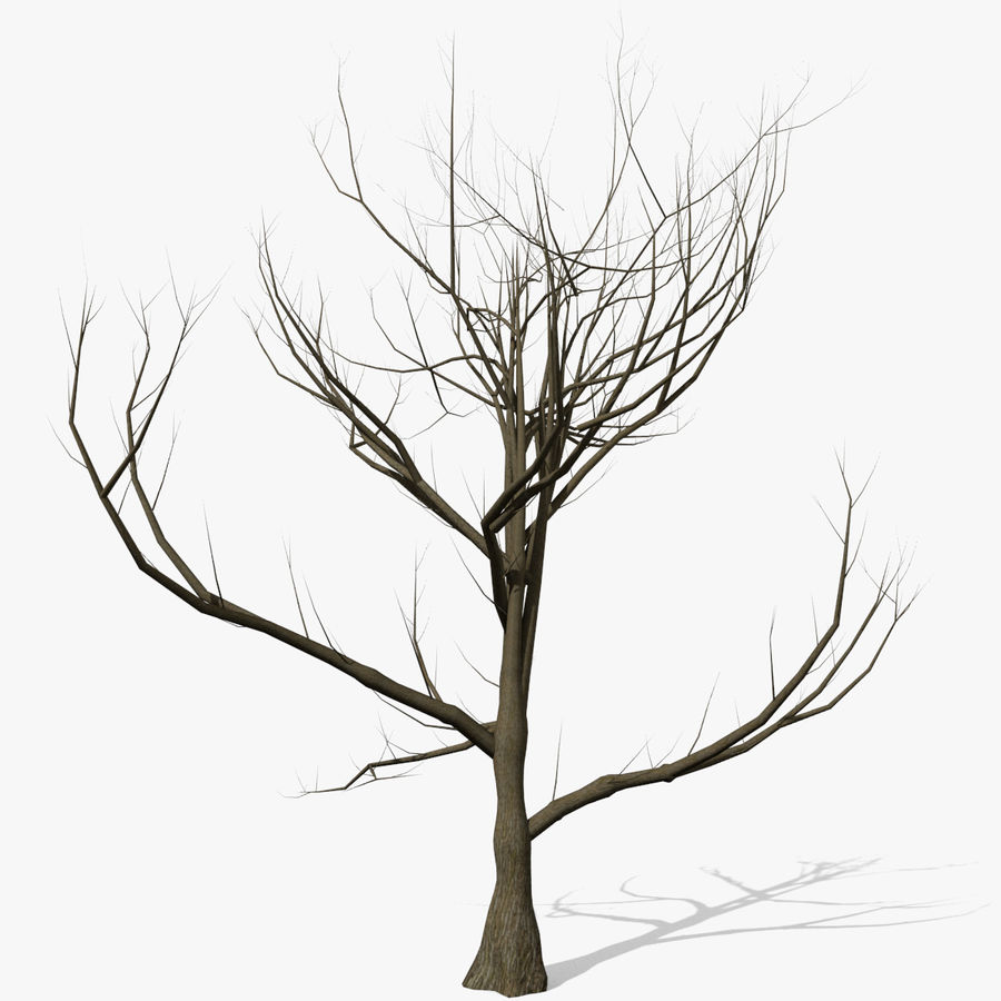 Tree Without Leaves royalty-free 3d model - Preview no. 1