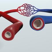 Realistyczna anatomia naczyń krwionośnych 3d model