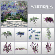 wisteria collection 3d model