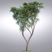 Serie de árboles realistas HI - 013 modelo 3d